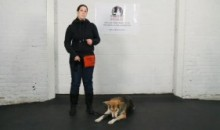 Dog Training – Counter Conditioning