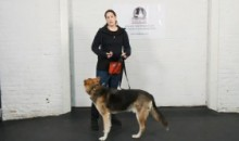 Dog Training – Leash Walking