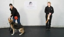 Dog Training – Working With a Reactive Dog